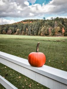 pumpkin on white fence