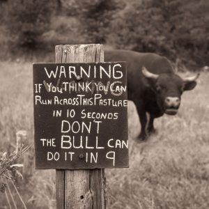 warning-sign-bull-pasture