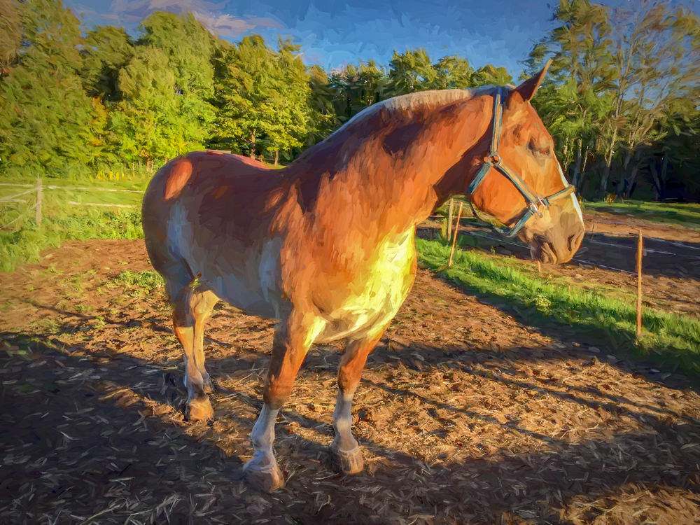 draft horse, Highland Farm, Pomfret, Vermont