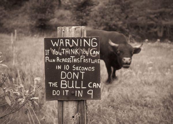 warning-sign-bull-pasture
